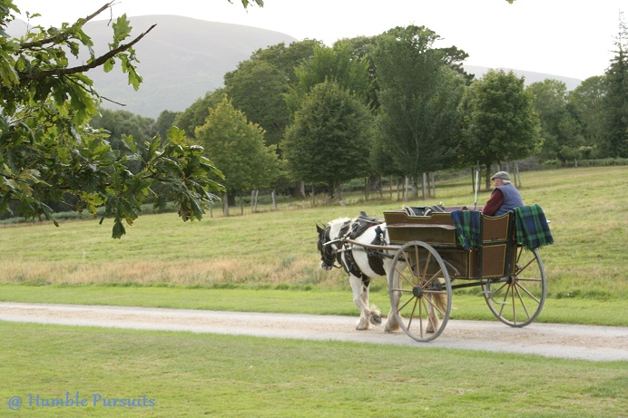 Irish Buggy, Horse and Carriage